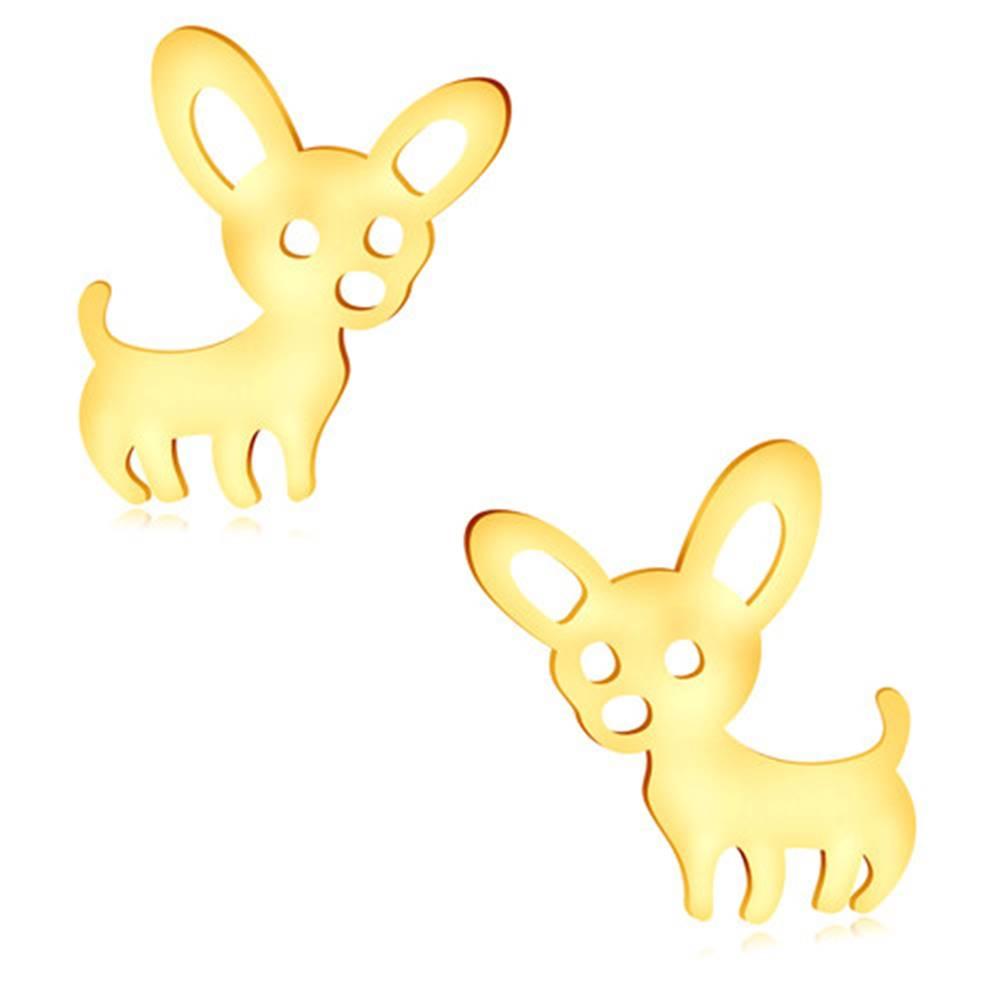 Šperky eshop Náušnice v žltom zlate 375 - lesklý psík s veľkými uškami, puzetky